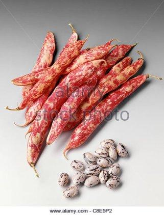 paimpol-haricot-beans.jpg
